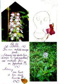 Poésie Lily2
