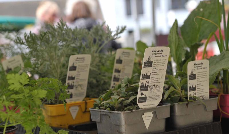 Villevaudé - bourse aux plantes 10