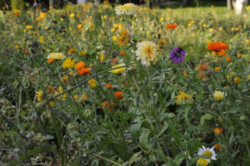 Parc floral2